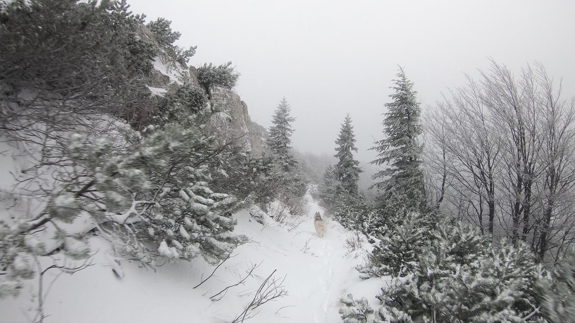 Risnjak_zimi1.jpg (1.35 MB)